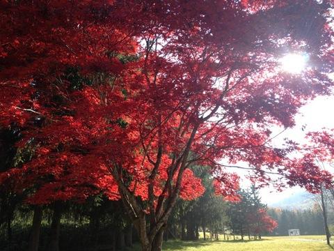 今年の紅葉は奇麗です。